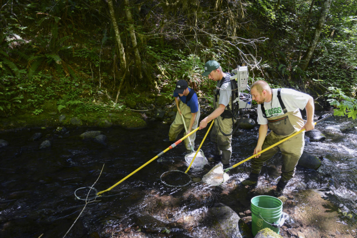 U.S. Geological Survey researchers Jonathan Schafer, from left, Brad Liedtke and Ian Jezorek use an electrofisher to immobilize fish Thursday on Buck Creek, a tributary of the White Salmon River, to allow capture, documentation and tagging. (Ariane Kunze/The Columbian)