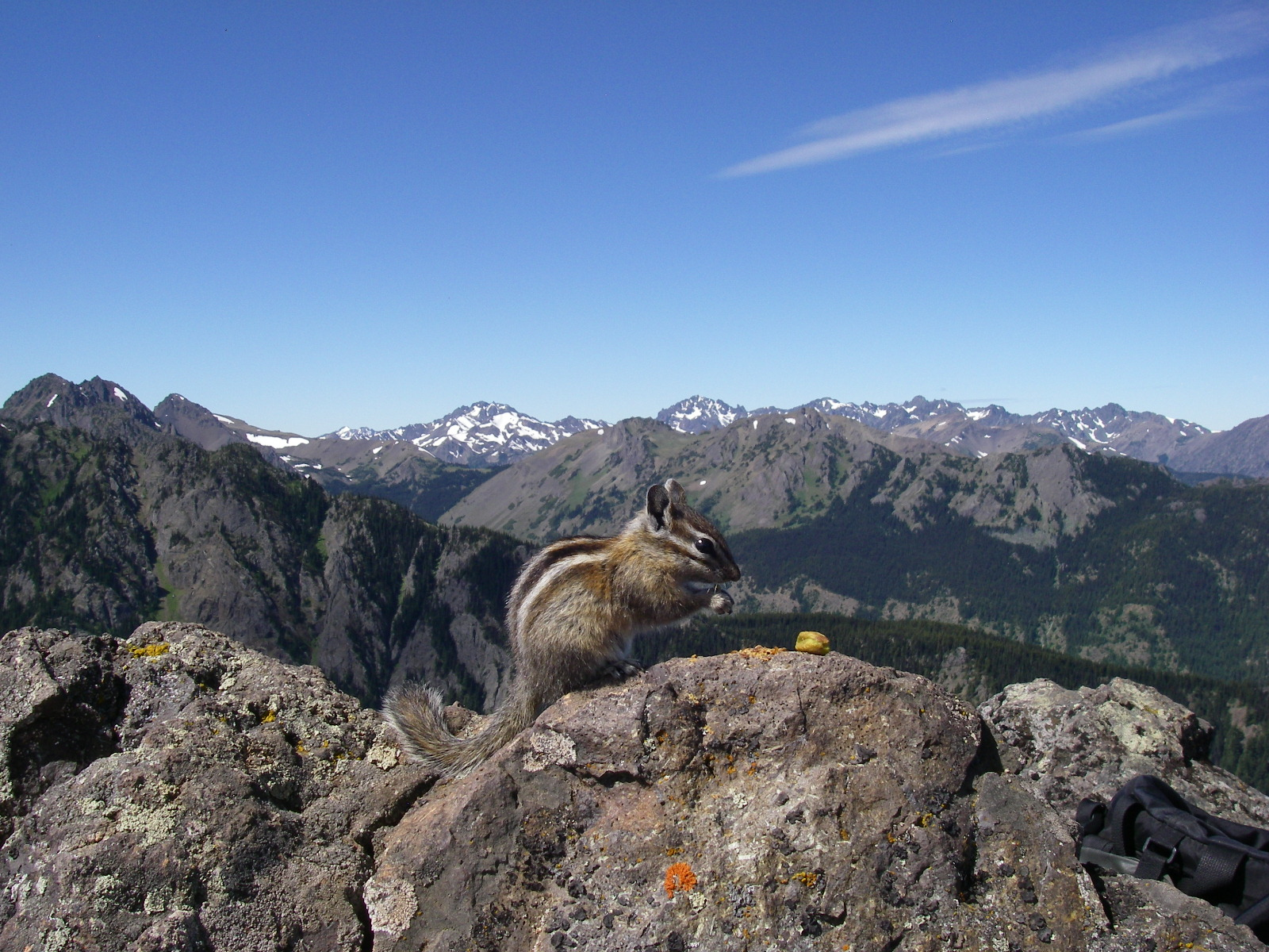 A companion celebrating with Colleen Burch and Rod Orlando on the summit of Mount Townsend in the Olympic National Fores,WA on July 25, 2016.  This was Colleen's first mountain seven weeks after a heart transplant. Colleen took the photograph.