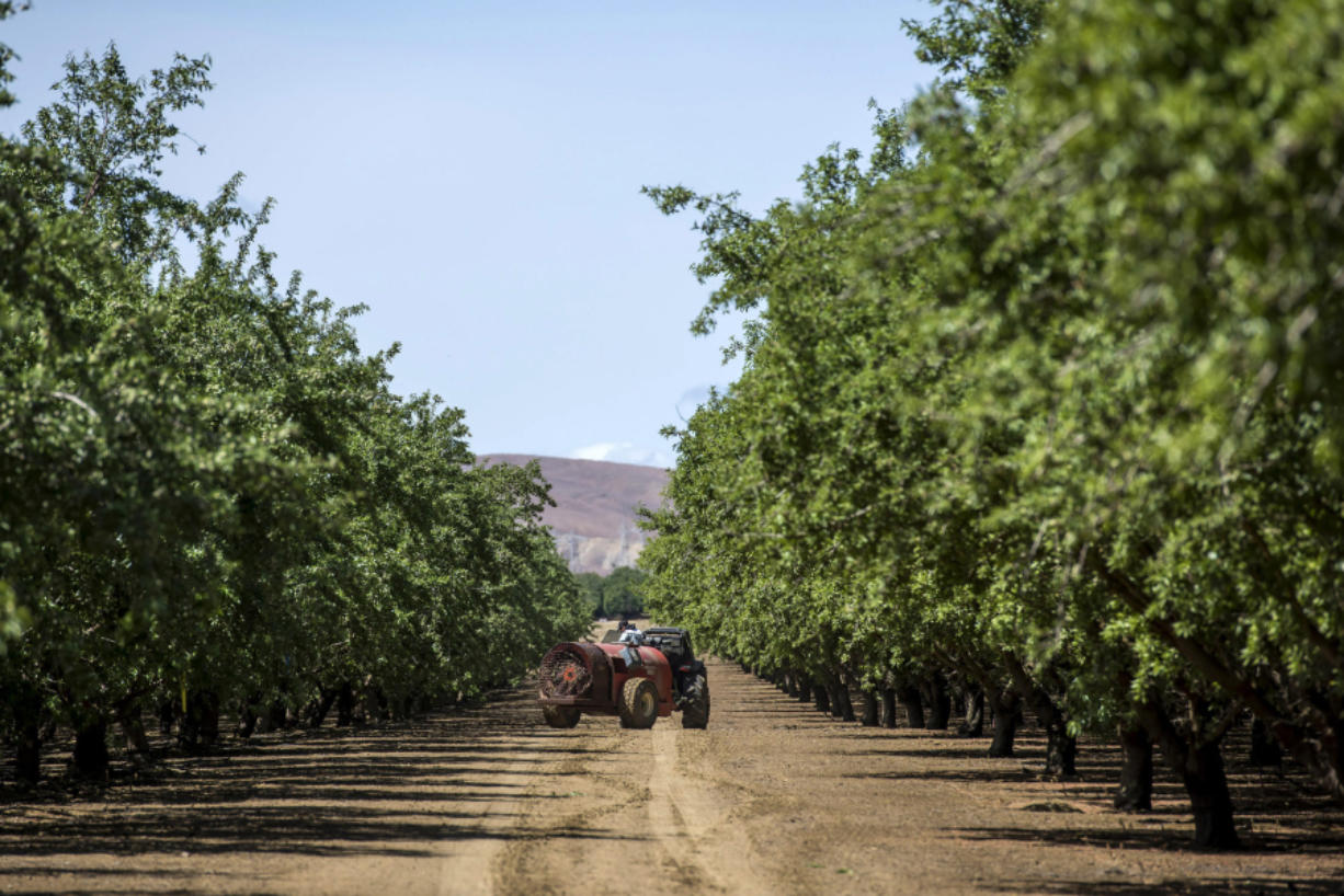 A worker sprays almond trees with pesticide at Del Bosque Farms Inc. in Firebaugh, California, U.S., on April 6, 2015.