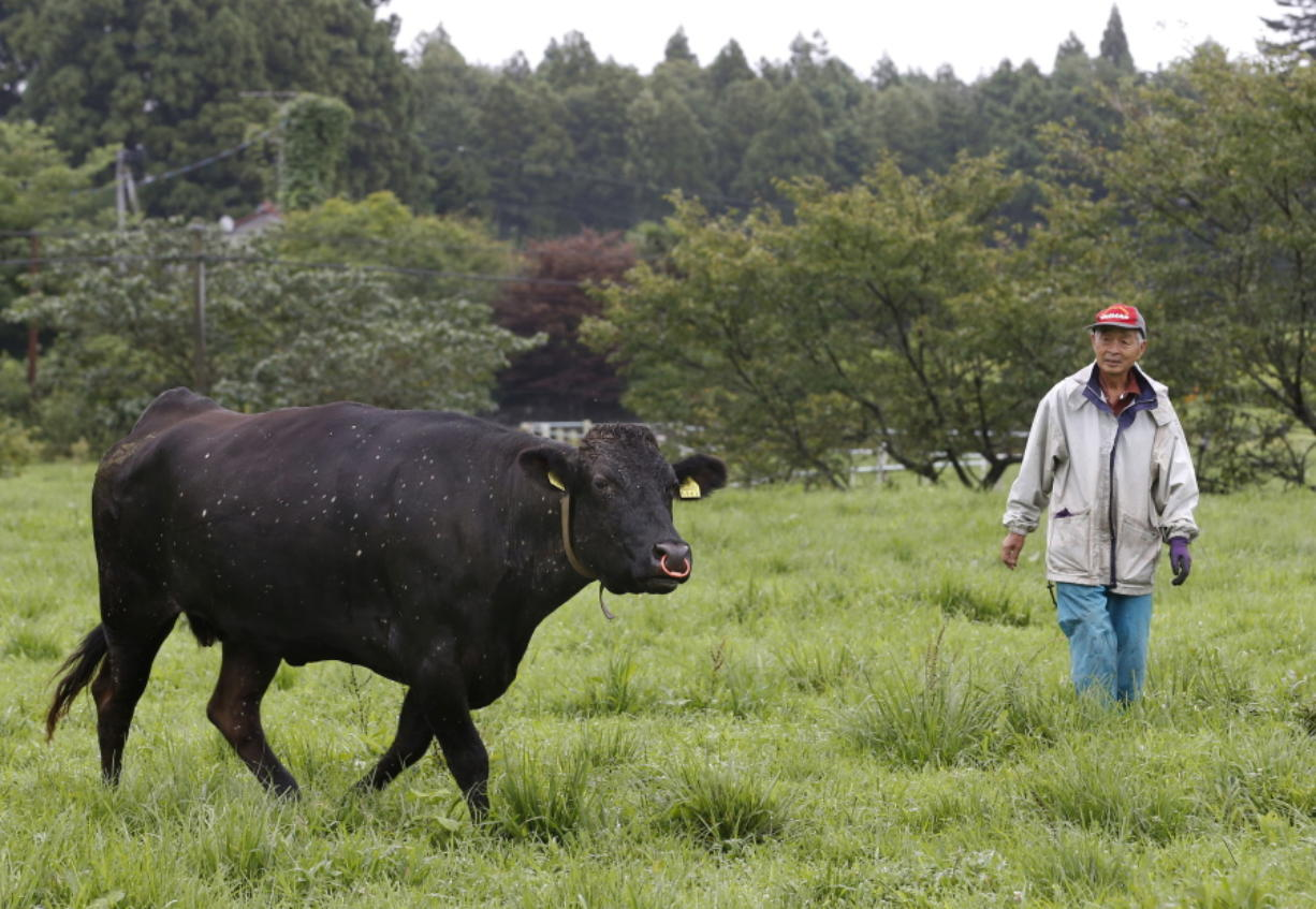 Yukio Yamamoto, owner of the large Yamamoto Ranch, looks at his cow after its medical check-up at his ranch in Namie town, 12 kilometers (7.5 miles) north of the crippled Fukushima Dai-ichi nuclear power plant on Aug. 27, 2016. Ranchers who refused a government order to kill their cows continue to feed and tend about 200 of them as part of a study by researchers who formed the nonprofit Society for Animal Refugee & Environment post Nuclear Disaster. Yamamoto, who travels three hours roundtrip to feed his remaining cows from his temporary home, carried out decontamination work on his ranch on his own.