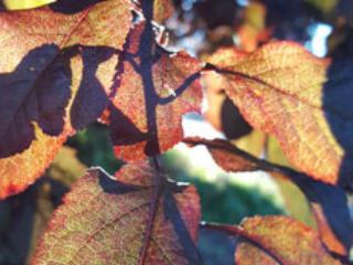 September reader photos: Seasons
