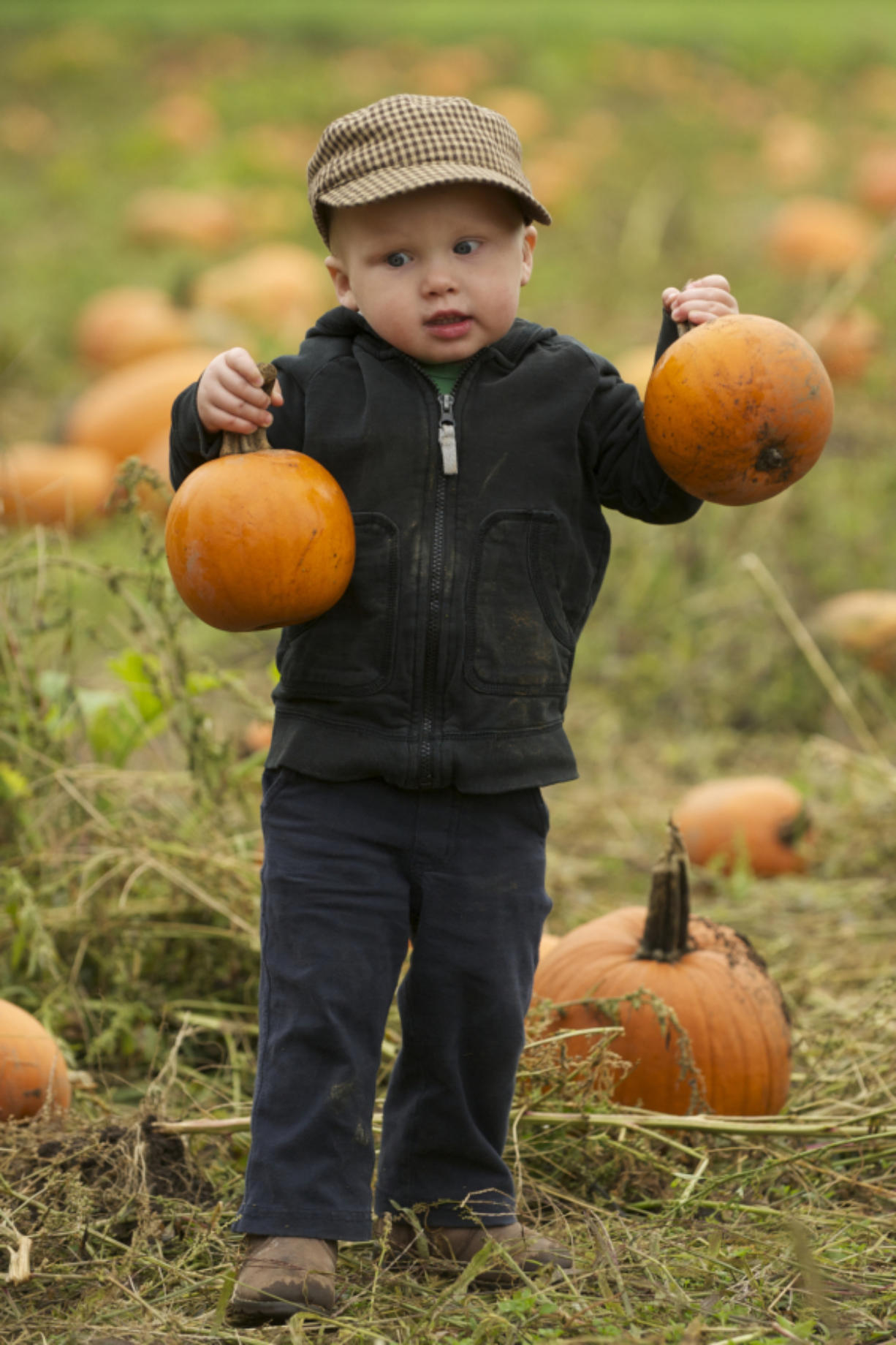 Benji Lee, 2, from Battle Ground, finds two perfect pumpkins at the Pumpkin Festival at Pomeroy Living History Farm.