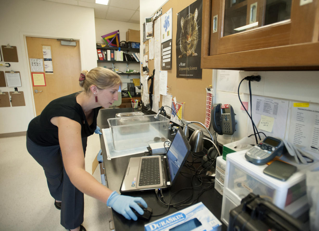 Doctorate student Elena Mahrt observes as a male and female laboratory mouse interact at Washington State University Vancouver on Tuesday afternoon. A high-frequency microphone is able to pick up the high-pitched vocalization produced by the male mouse as he courts the female, which can be seen on the computer.