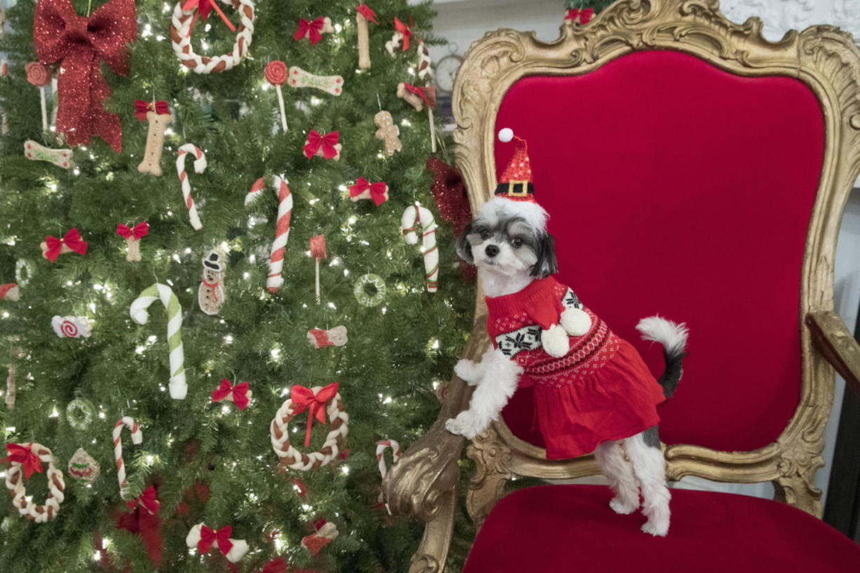Petsmart Christmas Hours.Pets Are People Too When It Comes To Gifts Columbian Com