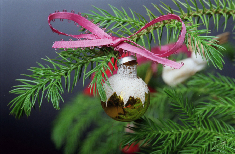 little pine perfect as christmas tree - The Year Of The Perfect Christmas Tree