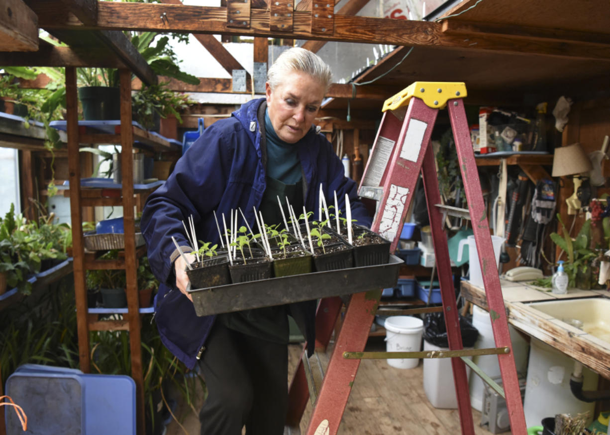 Valerie Alexander, owner of Coyote Ridge Ranch outside of La Center, starts some of her crops in a greenhouse.