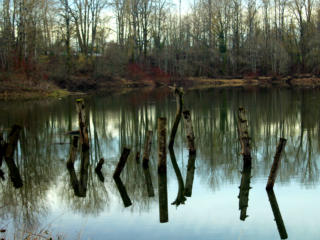 Reader photos, March: Reflections