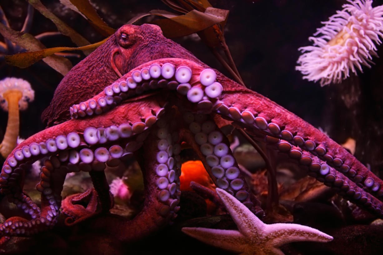 Octopuses and squids are some smart sea creatures.