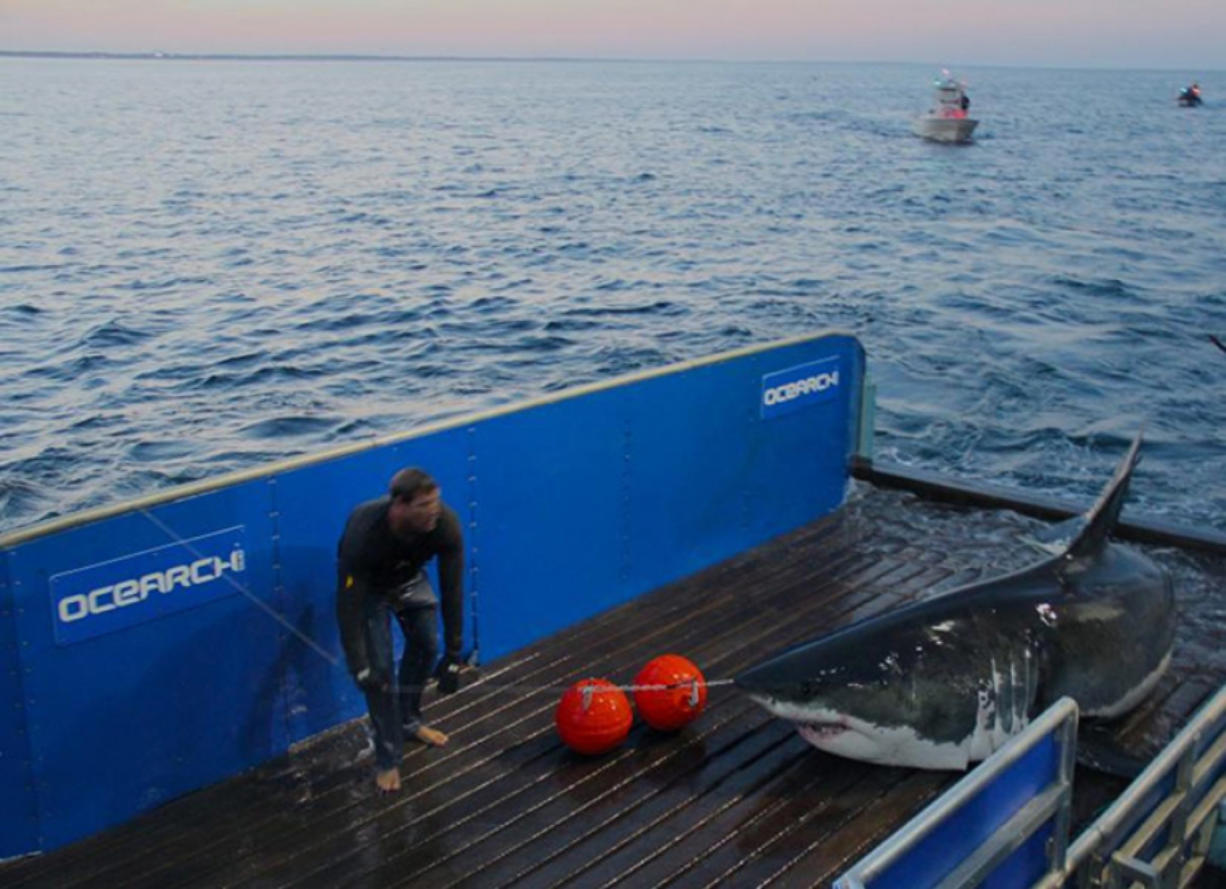 16-foot, 3,500-pound great white shark shows up off coasts