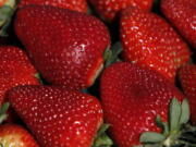 Fresh strawberries in a UC Davis strawberry field in Watsonville, Calif.