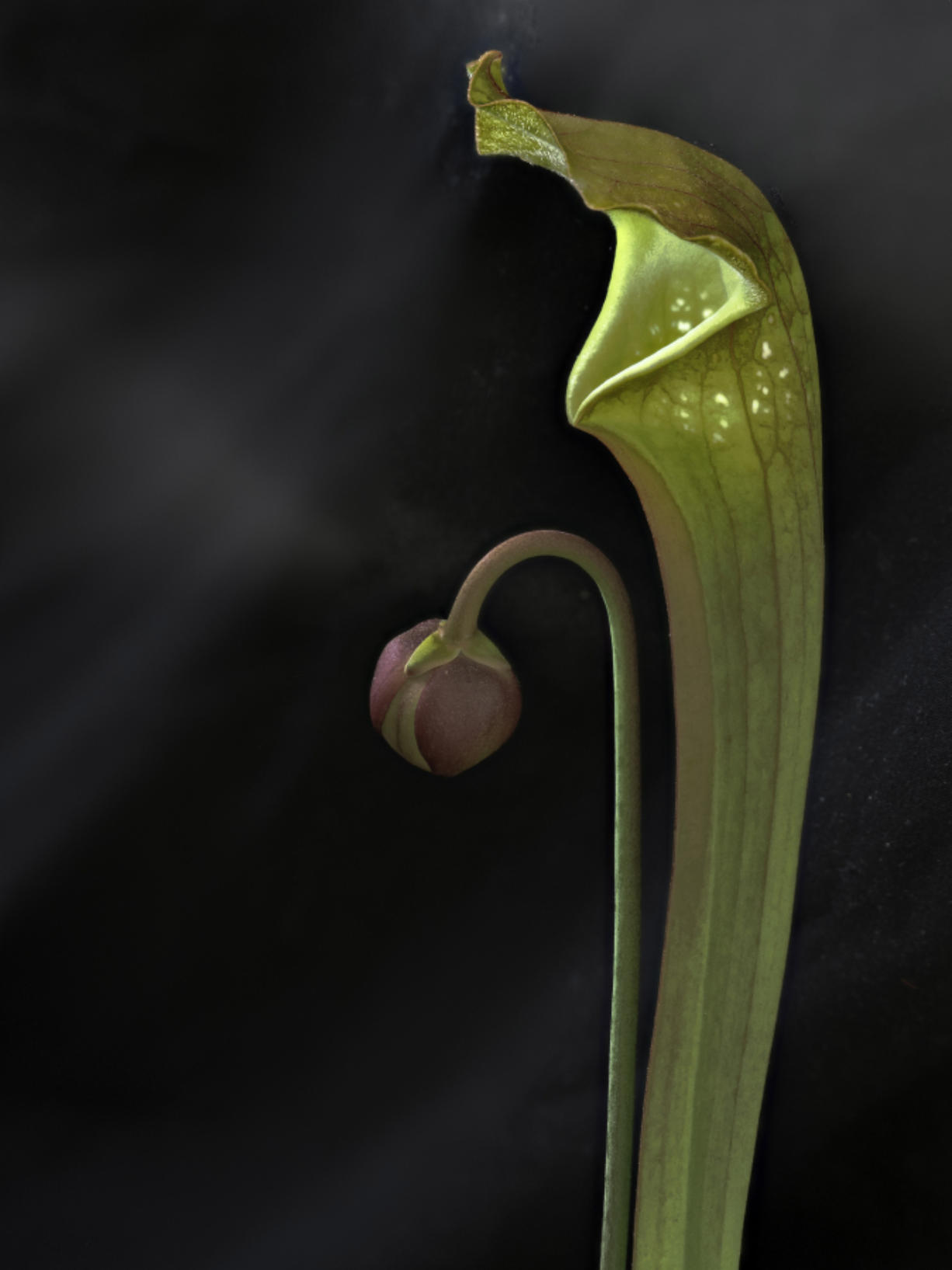 Demand For Carnivorous Plants Grows Columbian