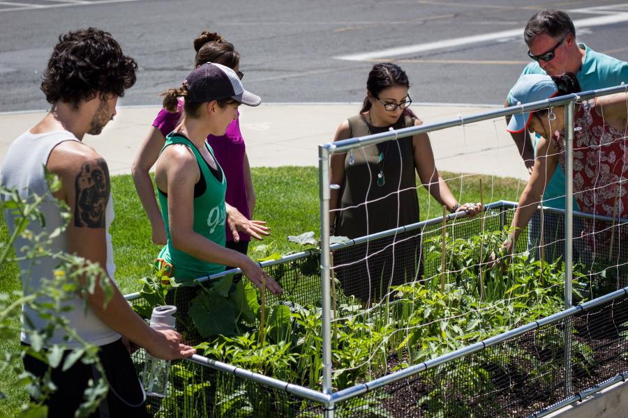 Incroyable This 2015 Photo Provided By The Organic Gardener Shows A Backyard Garden In  Winnetka, Ill. (Heather Blackmore/The Organic Gardener Via AP)