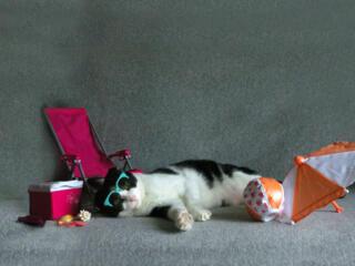 August reader photos: Lazy