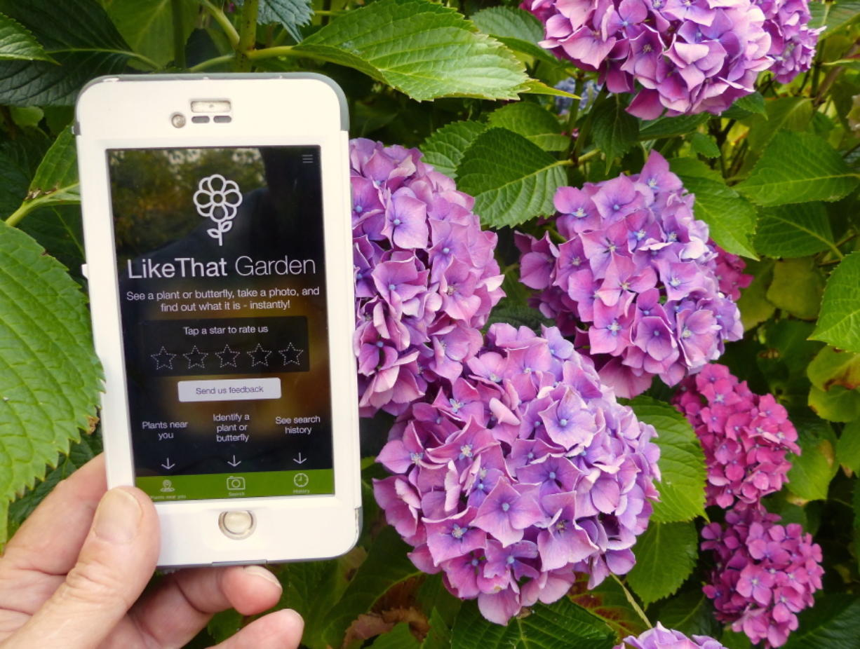 A gardener in Langley uses the Like That Garden app, one of the many entries in the expanding field of apps designed to instantly identify unknown plants or butterflies from a photo taken by the phone camera. Dean Fosdick/Associated Press