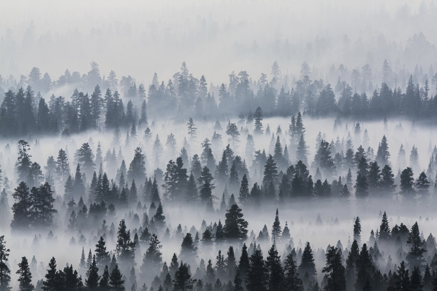 wildfires threaten homes pollute air in pacific northwest the