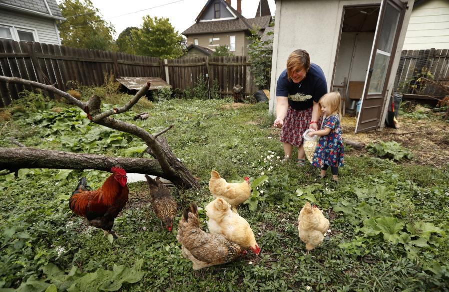 Chickens Backyard backyard chickens hatch illness | the columbian