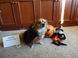 October reader photos: Animal costumes