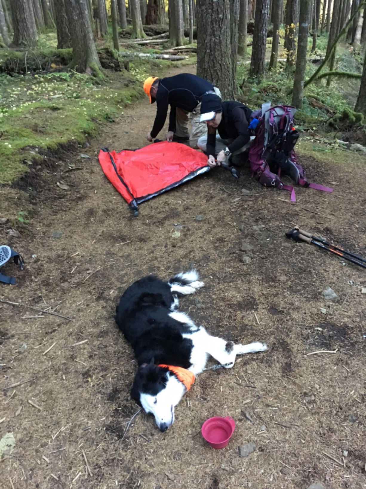 Laura Stockton and Rick Blevins helped Andy Healy create a litter to evacuate her 35-pound border collie, Fen, after she lost the ability to use her legs while hiking Oct. 29. Fen became unresponsive after eating a discarded marijuana edible in a vacant campsite. Contributed by Andy Healy