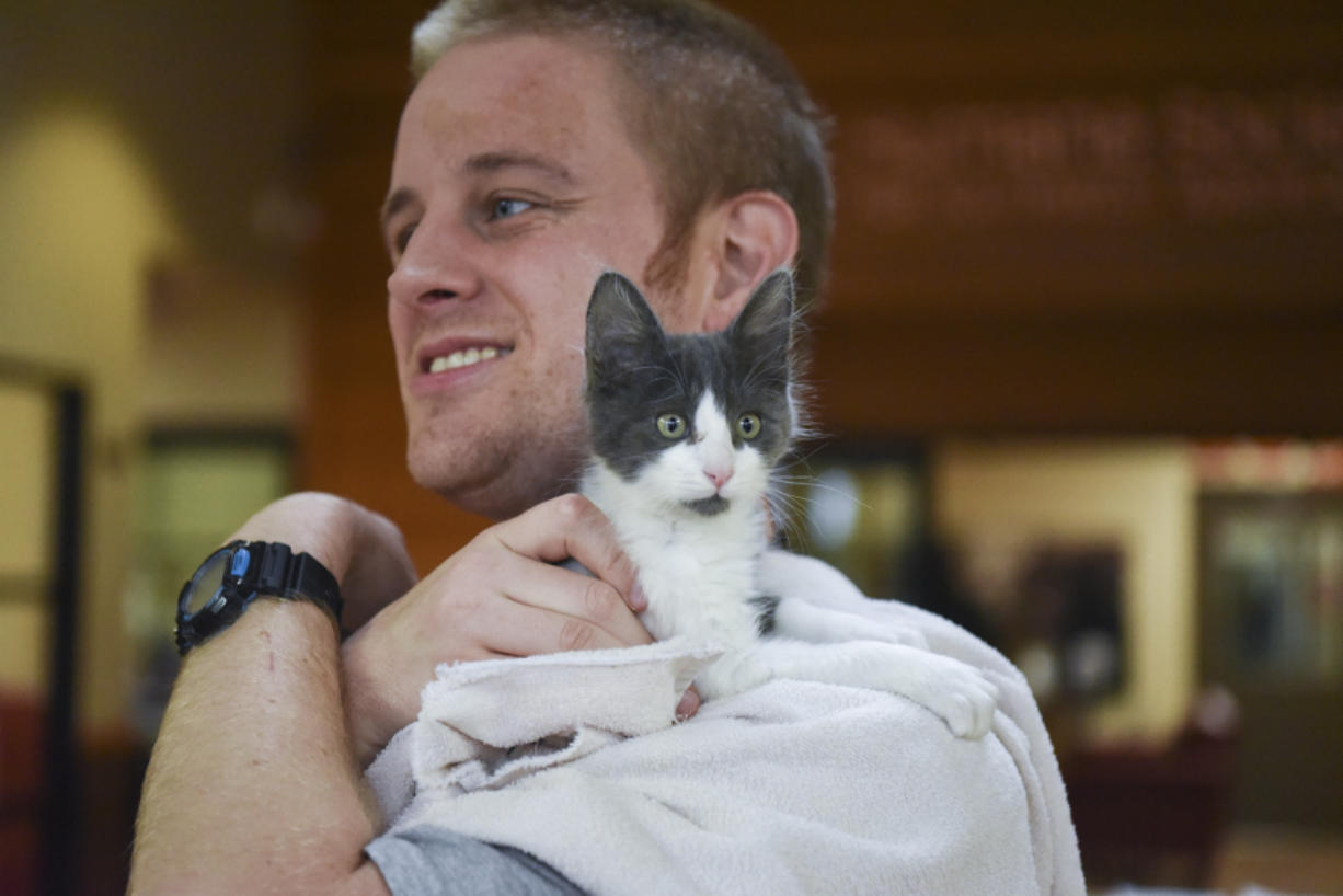 After getting a health check and spending some time with a foster family and getting vaccinations, Chai, a male kitten, is ready for adoption. Sean Dinsmore, a volunteer at the Humane Society for Southwest Washington, gives him a break from his kennel.