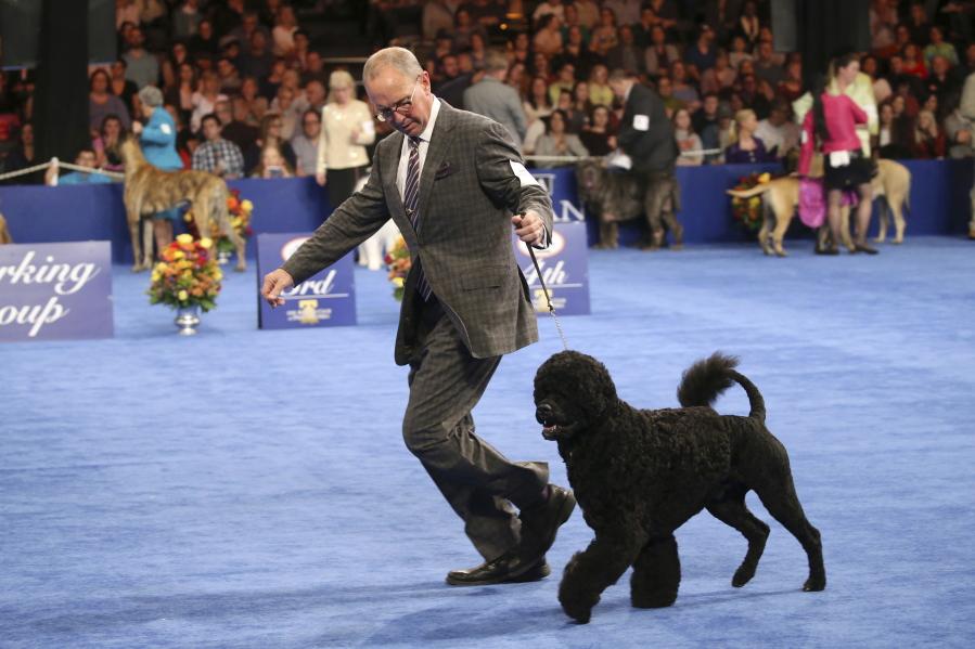 philadelphia dog show 2017 winner