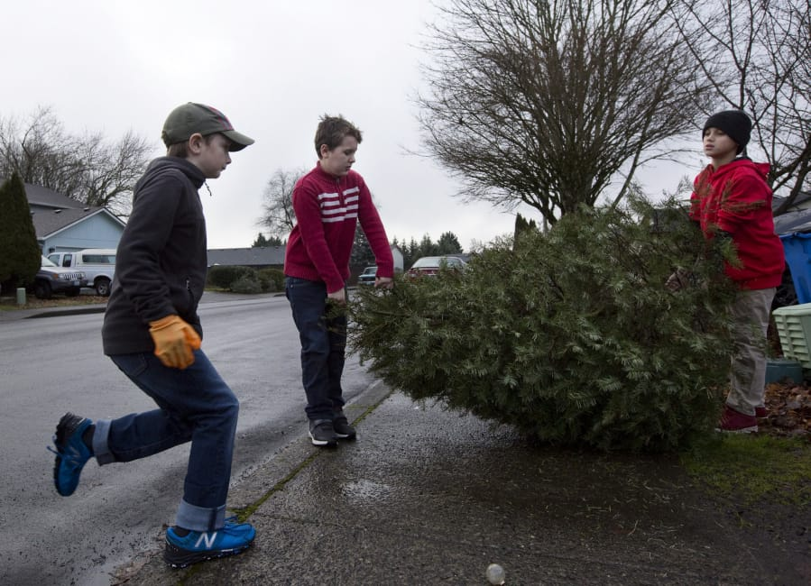 Boy Scouts collect, recycle thousands of Christmas trees - Boy Scouts Collect, Recycle Thousands Of Christmas Trees The Columbian