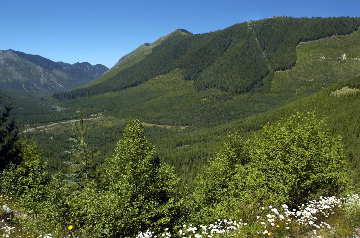 This 2005 photo looks west from Forest Road 26 northeast of Spirit Lake toward Goat Mountain, the area where Ascot USA Inc. wants to drill exploratory holes to study the possibility of mining for minerals such as copper, gold and molybdenum. The U.S. Forest Service has given its consent to allow the exploratory mining near Mount St. Helens. (The Columbian files)