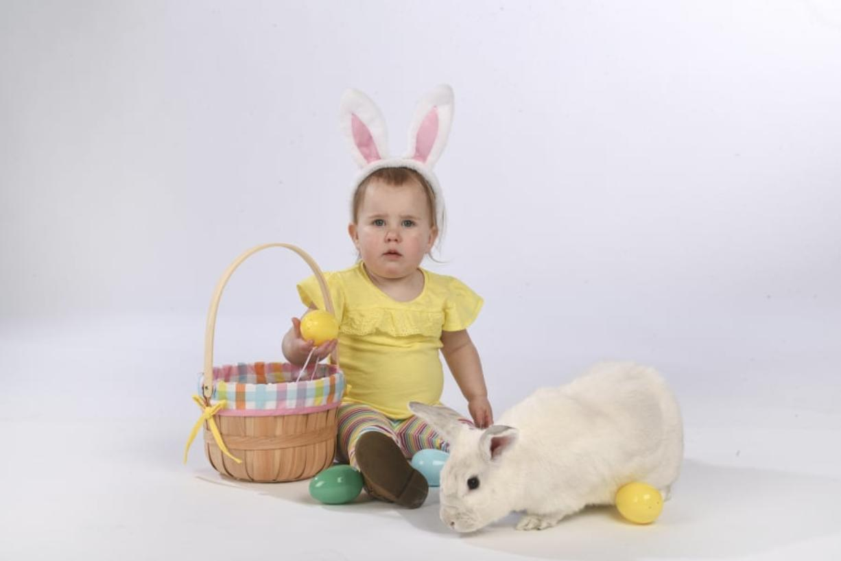 Ariane Kunze/The Columbian Morgan Armstrong, 22 months, and Cameron, a Californian-American mix rabbit, get ready for Easter in The Columbian's photo studio last week.
