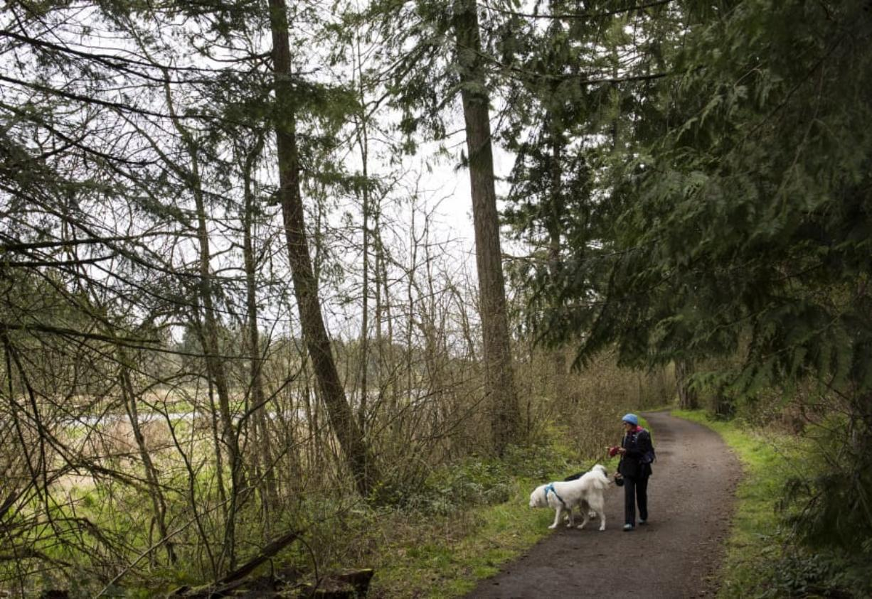 Sheryl Beauchaine of Vancouver walks her daughter's dogs recently on Heritage Trail along Lacamas Lake. The biofilter in the lake has not been maintained for about 30 years, causing it to become overgrown with trees.