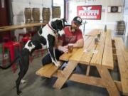 Jeff Seibel and his dog, Zeus, inspect a pint at Ghost Runners Brewery's taproom, 4216 N.E. Minnehaha St. After a monthslong civil case against a former investor, the brewery will lose a lease at The Waterfront Vancouver but keep its taproom.