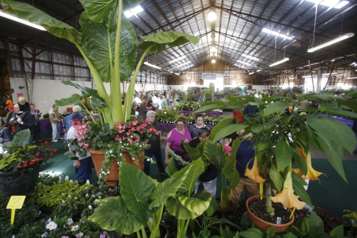 Weather Perfect For Annual Home Garden Idea Fair