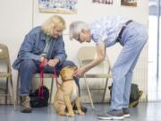"""Carol """"C.J."""" Andrew, owner of C.J.'s Dog Training uses rewards as a way to train dogs in her classes, versus punishment techniques such as shock collars and choke chains."""