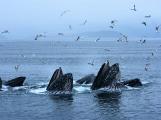 Reader photos August: Wildlife