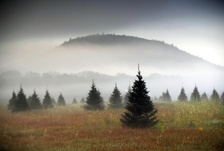 Start A Christmas Tree Farm Business