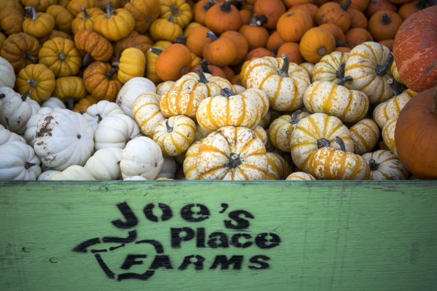 Pumpkin Season Brings More Than Gorgeous Gourds The Columbian