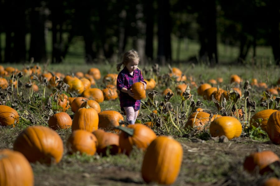 Pomeroy Farm's Pumpkin Lane delights, 'telling stories' - Columbian com