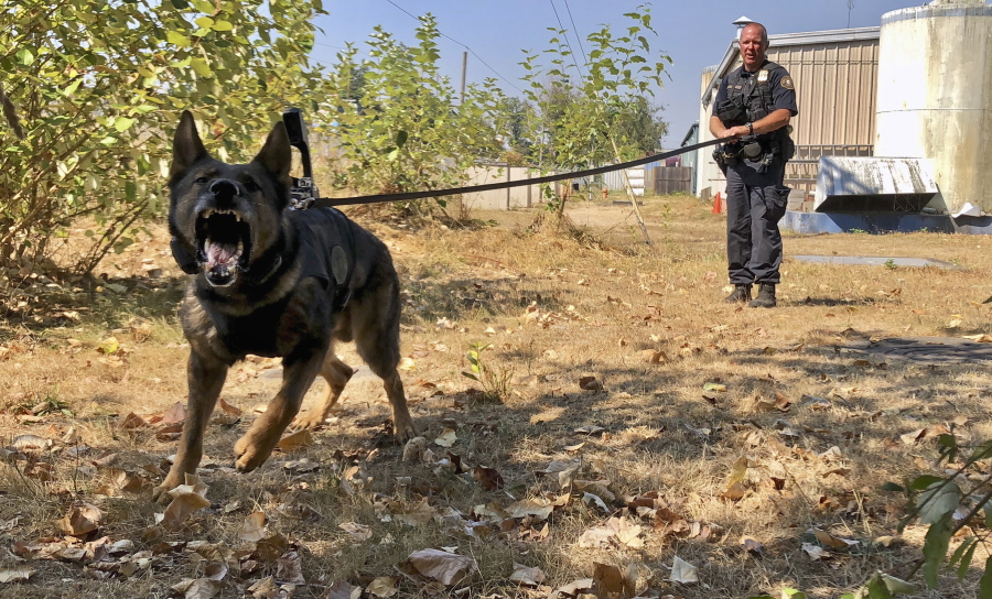 Police dogs have cameras, too - The Columbian 1