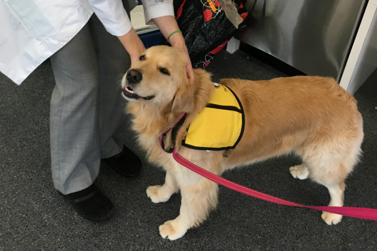 Therapy dog Winnie in Baltimore, Md.