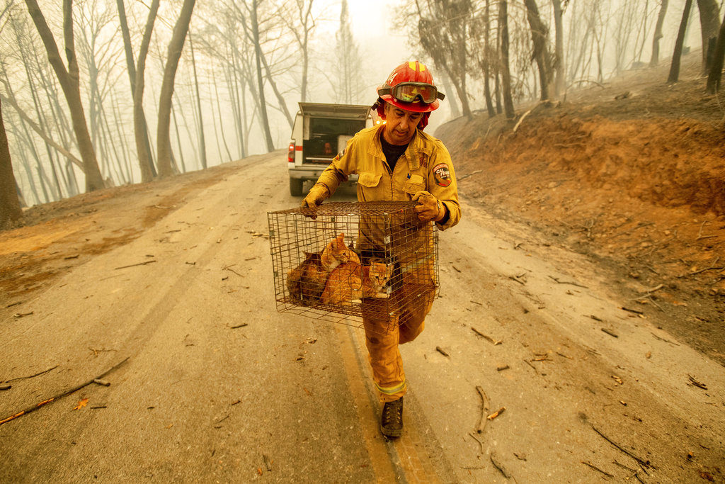 Dead In Cars And Homes Northern California Fire Toll At 29 The