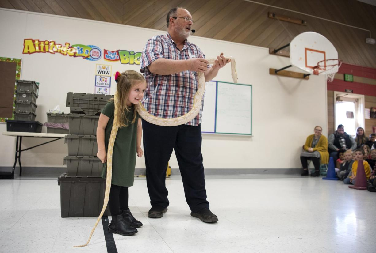 Scarlet Ferguson, Glenwood Heights Primary School kindergartener, lets a reticulated python rest around her neck during Richard Ritchey's Reptile Man presentation at Glenwood Heights Primary School in Vancouver on Dec. 6, 2018. (Alisha Jucevic/The Columbian)