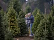 Lynda and Paul Ekeberg of Vancouver check out the selection of trees while stopping by The Tree Wisemans in Ridgefield on Friday morning, Dec. 7, 2018.