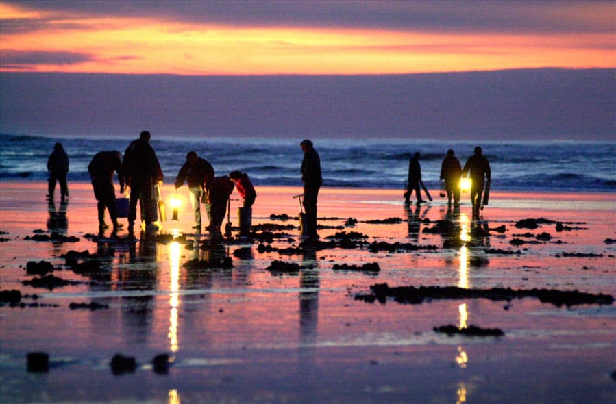 Clammers can finally dig for razor clams on Long Beach.