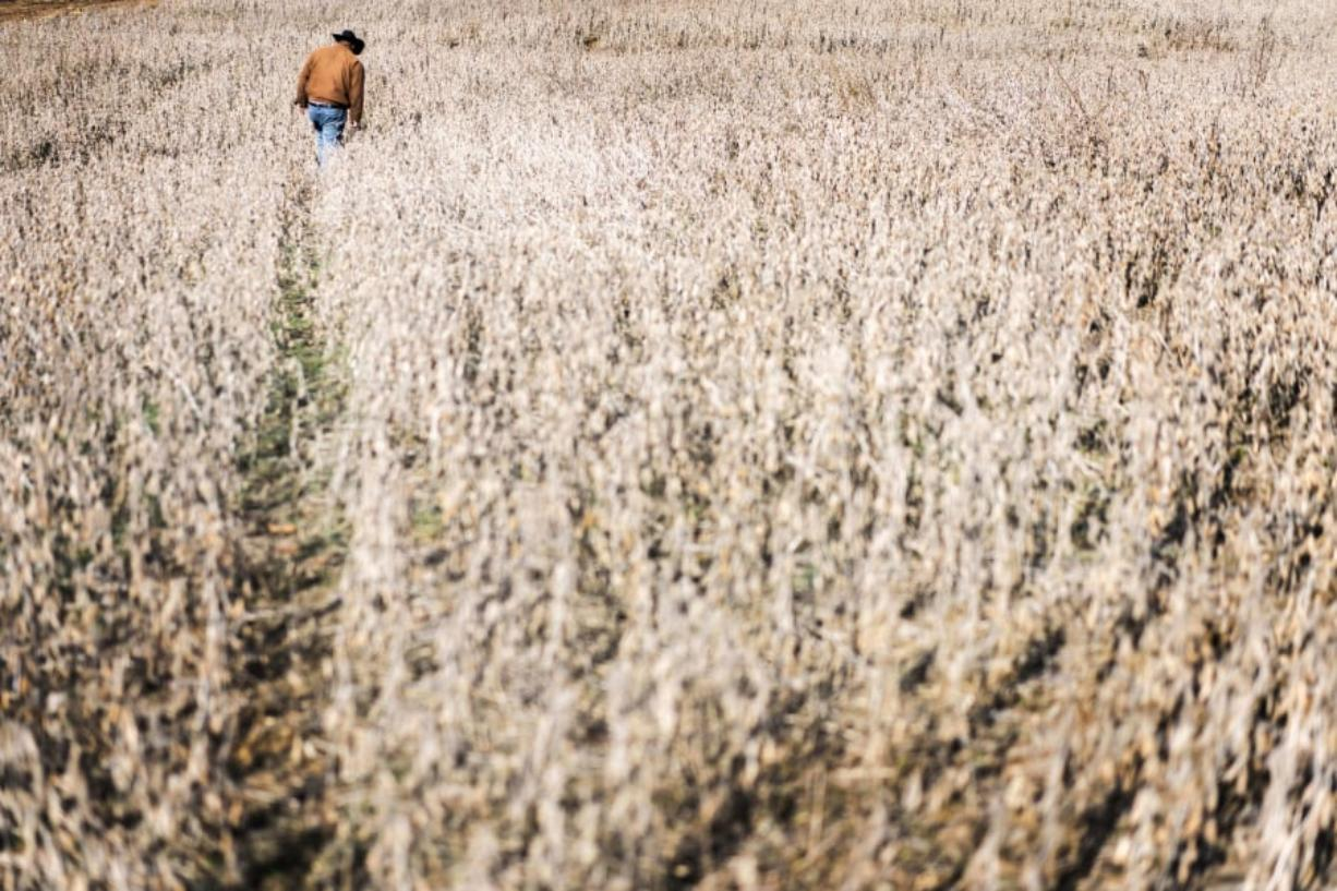 John Boyd, president of the Black Farmer's Association, checks the condition of a soybean field for harvesting in Baskerville, Va. Below: Boyd is a fourth-generation crop farmer.