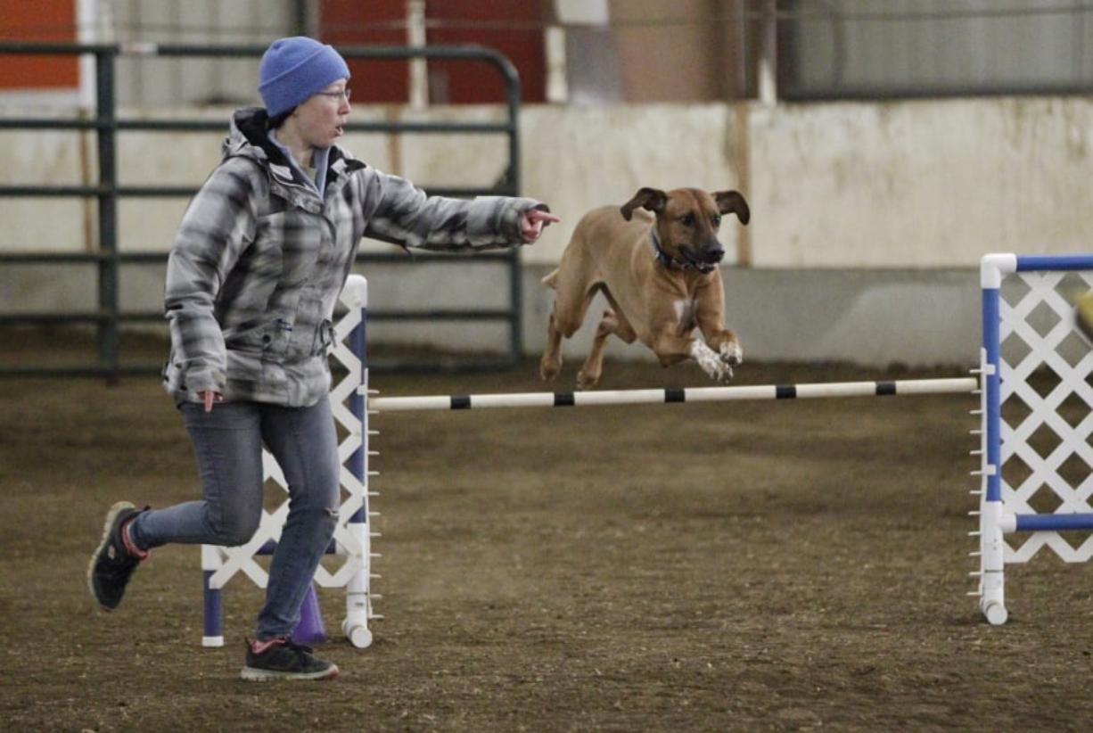 Dogs Show Off Agility At Trials A Qualifier For Nationals