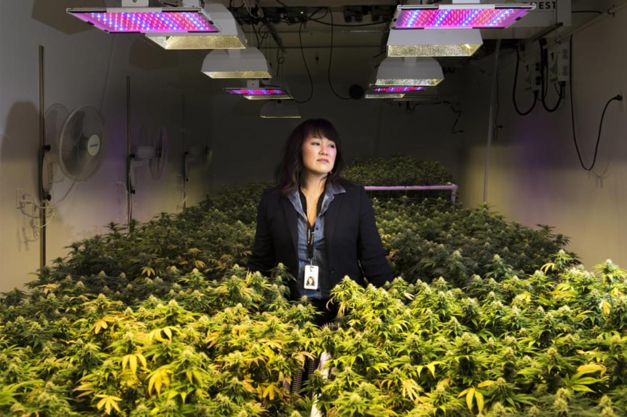 Wendy Hull with Fairwinds Cannabis stands in one of the company's flower rooms Tuesday afternoon in Vancouver. Hull said her company faces uncertainty because of a new policy from the state Liquor and Cannabis Board that requires cannabis companies to put even less information on their products' packaging. At top, CBD products are seen at Fairwinds Cannabis. CBD, or cannabidiol, is the nonpsychoactive compound in marijuana. Several local legislators are trying to address the packaging issue.