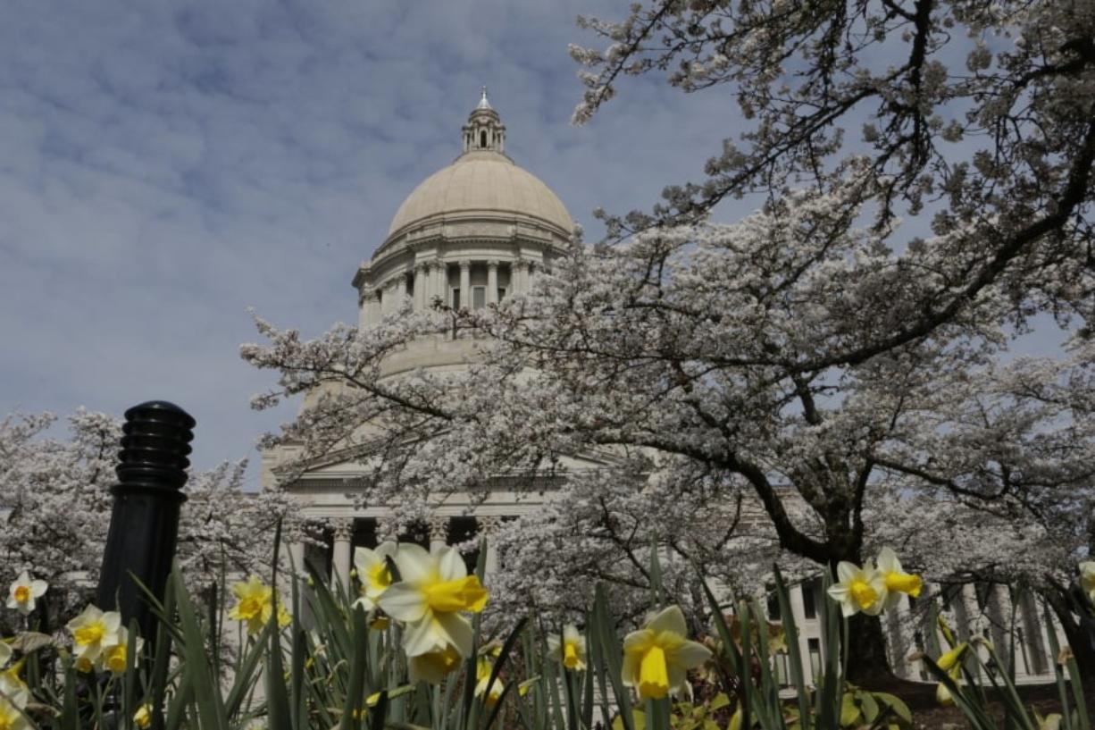 The Capitol dome is seen through cherry blossoms and daffodils on Friday in Olympia. (Rachel La Corte/Associated Press)
