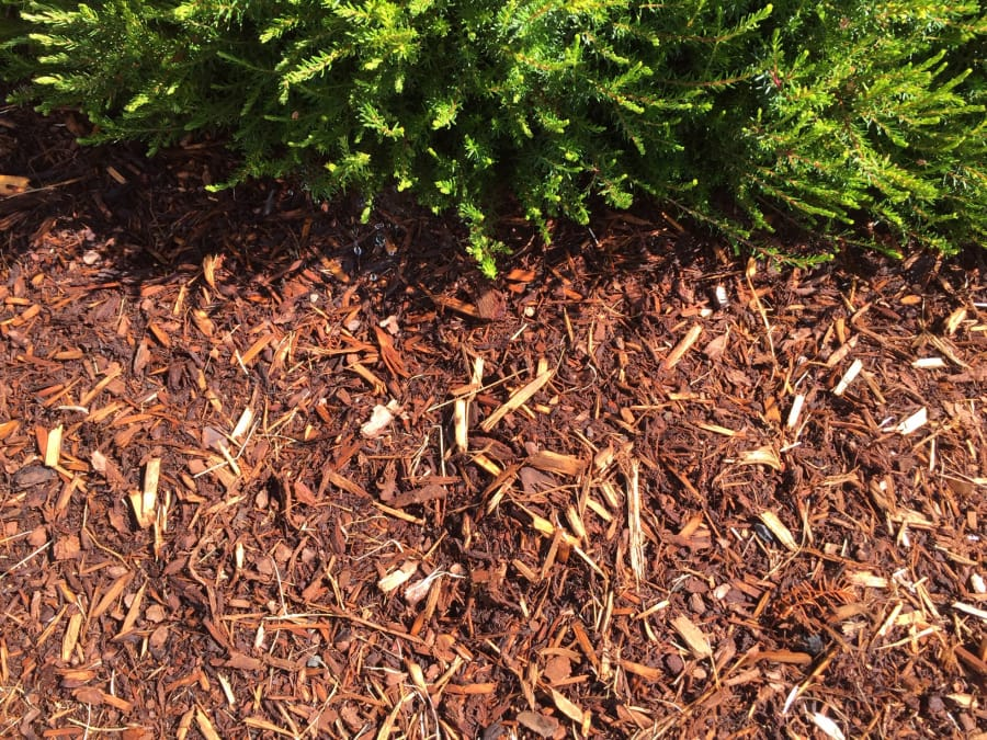 Bark Mulch Can Reduce Weed Sprouting By 90 Percent. Contributed By Allen  Wilson