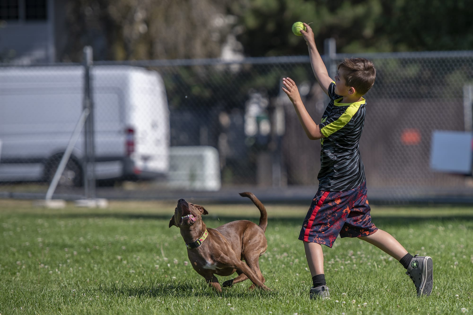 Pups play in Vancouver pop-up, off-leash park - Columbian com