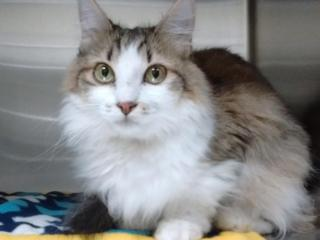 Pets of the week, Aug. 15
