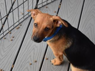Pets of the Week, Aug. 23