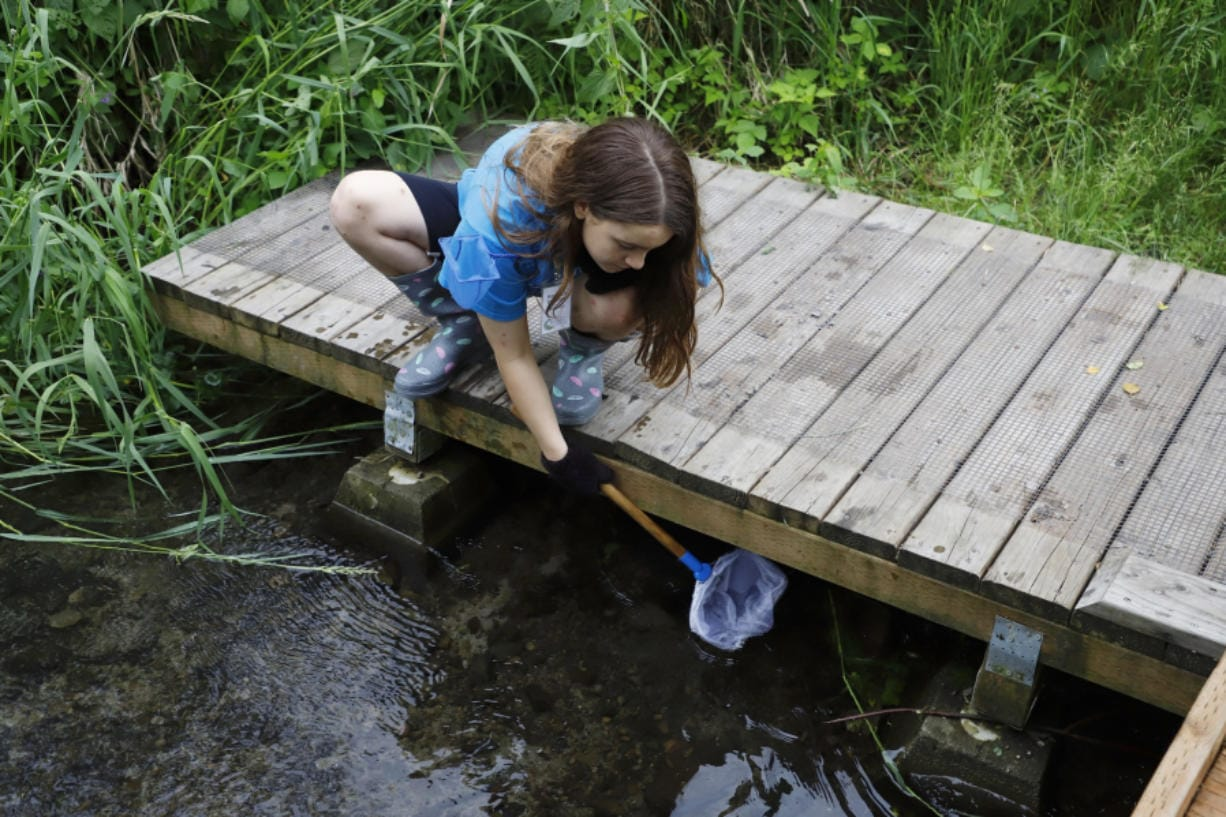 Enjoy a sunny afternoon surrounded by nature during Family Nature Day, Aug. 31 at Columbia Springs.